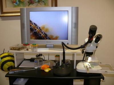 Microvisioni