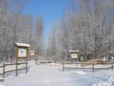 Bora d'inverno